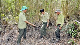 Mekong Delta provinces face high risk of forest fire in peak dry season