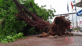 HCMC strengthens measures against natural disasters