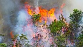 Central region warned of severe forest fire danger