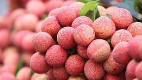 MoT proposes reduction of airfreight rates for Bac Giang lychees