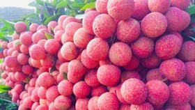 Bac Giang compiles three scenarios for lychee consumption amid Covid-19