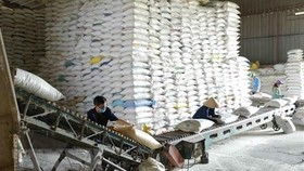 Over 130,000 tons of rice allocated to 24 pandemic-hit localities