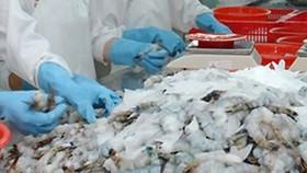 Hoa Kỳ hủy bỏ thuế chống phá giá tôm của Tập đoàn Thủy sản Minh Phú