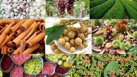 537 đầu mối cung cấp nông sản phía Nam được kết nối