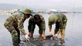 Vớt quả ngư lôi nặng gần 100kg lên khỏi mặt nước