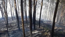 Quảng Ngãi: Cháy gần 15 ha do sơ suất đốt rẫy