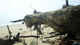 Xói lở bờ biển ở bãi biển Mỹ Khê, Quảng Ngãi