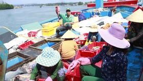 Quảng Ngãi: Hơn 1.100 tàu cá dài từ 15m được cấp giấy chứng nhận đủ điều kiện an toàn vệ sinh thực phẩm