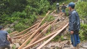 Quảng Ngãi: Đưa gỗ khai thác trái phép ra khỏi rừng,truy xuất camera xác minh 6 đối tượng liên quan