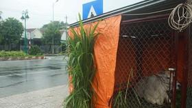 Quảng Ngãi: Hàng trăm hecta nông nghiệp và thủy sản bị thiệt hại, lũ đang rút