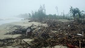 Củi khô bủa vây hơn 10km bờ biển Mỹ Khê, Quảng Ngãi.