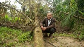 Quảng Ngãi: Sớm khôi phục vườn cây ăn quả sau mưa bão