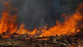Quảng Ngãi cảnh báo nguy cơ cháy rừng cấp 4,5