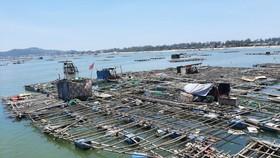 Nuôi trồng thủy sản Quảng Ngãi đối mặt nhiều khó khăn do dịch Covid-19