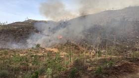 Quảng Ngãi: Liên tiếp xảy ra hai vụ cháy rừng trồng