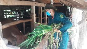 Thanh niên Quảng Ngãi giúp nông dân đang cách ly y tế thu hoạch nông sản