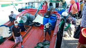 Quảng Ngãi vừa chống dịch vừa đảm bảo xuất nhập hải sản cảng cá