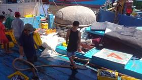 Quảng Ngãi tạm dừng 2 cảng cá, 290 tấn hải sản ứ đọng, đang hư hỏng, bốc mùi