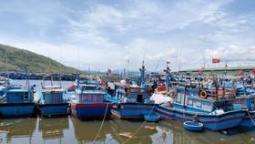 Quảng Ngãi cho phép cảng cá nhà nước hoạt động giải quyết tồn đọng hải sản