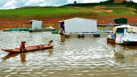 Khoanh nợ cho các gia đình bị thiệt hại do cá chết trên hồ thủy điện