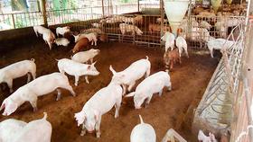 Chăn nuôi sinh học