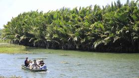Quảng Ngãi: Chính quyền muốn chặt 50ha dừa nước, nhà khoa học nói phải giữ
