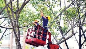 Thiếu phương tiện tỉa cành, cắt nhánh cây trong mùa mưa bão