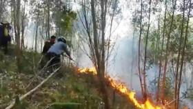 Nỗ lực dập tắt đám cháy rừng tại Hòa Vang, Đà Nẵng