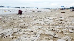 Ô nhiễm nghiêm trọng ở bãi Sau biển Mũi Né