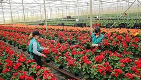 Trồng hoa công nghệ cao ở Lâm Đồng