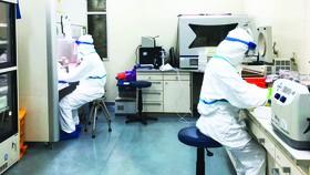 Việt Nam nuôi cấy và phân lập thành công chủng mới của virus Corona