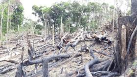 Giữ rừng để giảm nguy cơ hạn hán