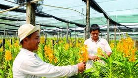 Sản phẩm nông nghiệp chủ lực khó tìm đầu ra