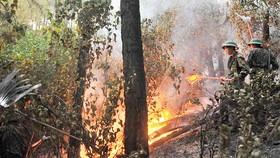 Miền Trung nơm nớp nỗi lo cháy rừng
