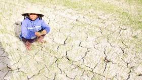Các tỉnh miền Trung đang bị hạn hán nghiêm trọng