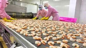 Chế biến tôm xuất khẩu tại Công ty cổ phần tập đoàn thủy sản Minh Phú