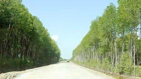 Đường Hồ Chí Minh đoạn Năm Căn - Đất Mũi đã thông xe kỹ thuật