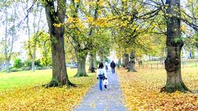 Bâng khuâng mùa thu
