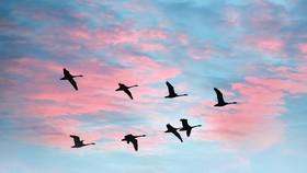 Độc thoại của một loài chim di cư