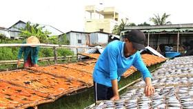 Đồng bằng sông Cửu Long tất bật sản xuất hàng tết