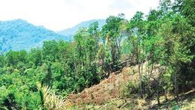 Rà soát các khu vực cấm khai thác khoáng sản trên đất rừng