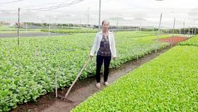 Trên 1.000 hộ nông dân Bình Định tham gia trồng rau an toàn