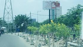 Bãi xà bần đã được thay bằng cây xanh