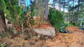 Thu hồi dự án của công ty Trung Nguyên vì để rừng bị lấn chiếm