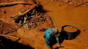 Những người khai thác vàng trái phép ở khu vực rừng nhiệt đới Amazon gần Crepurizao, Itaituba. Ảnh: REUTERS