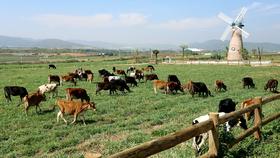 Vinamilk mở rộng hệ thống trang trại chăn nuôi bò đạt chuẩn quốc tế