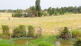 Hàng rào bảo vệ đường cao tốc TPHCM - Trung Lương, đoạn đi qua tỉnh Tiền Giang,  bị phá để làm lối đi vào nhà, làm ruộng