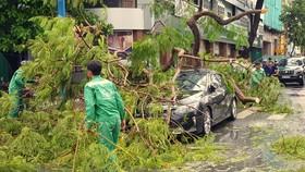 Một cây phượng tại Đại lộ Hòa Bình, quận Ninh Kiều ngã đè lên một chiếc xe ô tô