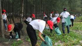 Các tình nguyện viên nhặt rác tại rừng dương ven biển