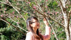 Mở cửa Không gian hoa anh đào Nhật Bản tại Đà Lạt